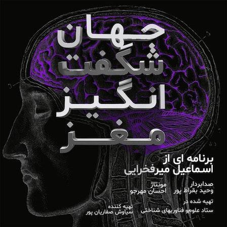 جهان شگفت انگیز مغز